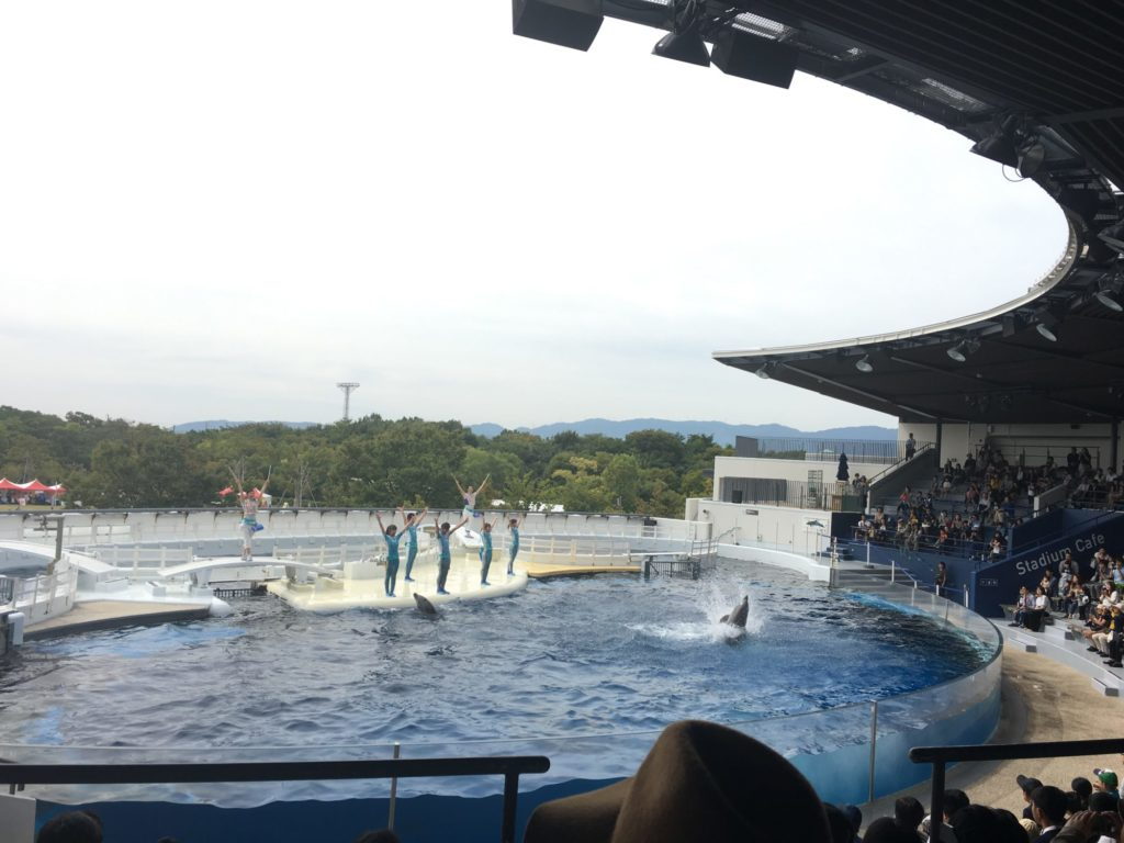 京都水族館 イルカショー寄り